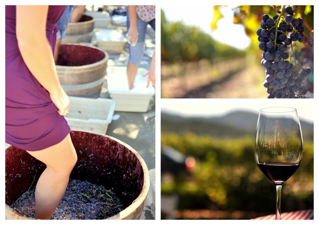 Napa Valley and Wine and Grapes